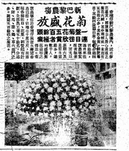 (賞菊在當時來算是一個不錯的節目了﹕工商日報1953-11-13)