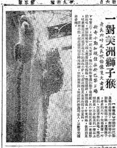 (請你飲馬騮尿的獅子猴﹕大公報1958-05-24)