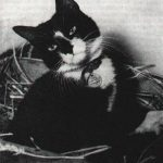 【港識.貓狗鬥一番】香港貓Simon — 軍艦上的英雄