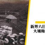 【新界六日戰爭】第二集:大埔村民開戰