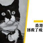 【紫水晶號】軍艦上的英雄貓 來自香港的Simon