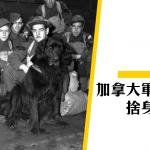 【香港保衛戰】義犬根達的故事